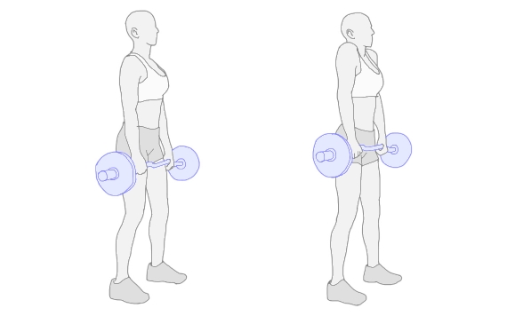 http://www.muscle-training.net/img/shrug_2.jpg
